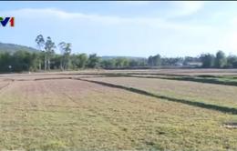 Khô hạn tiếp tục gay gắt tại Nam Trung Bộ