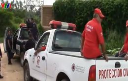 Giới chức Mexico khẩn trương truy tìm hổ xổng chuồng