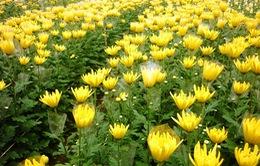 Việt Nam sắp xuất khẩu hoa tươi sang thị trường Ấn Độ
