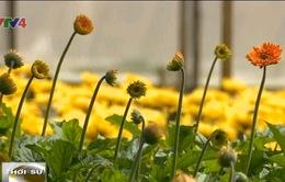 Đa dạng kênh quảng bá sản phẩm nông nghiệp