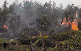 Hải Phòng: Hóa vàng gây cháy hàng nghìn mét vuông vườn đồi