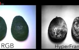 Máy ảnh giúp xác định độ chín của trái cây