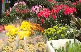 Nhộn nhịp đường hoa chợ Bưởi ngày cận Tết