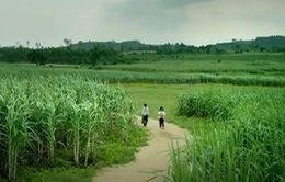 """Trailer """"Tôi thấy hoa vàng trên cỏ xanh"""" gây sốt là bản nháp"""