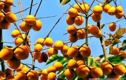 Tăng cường hợp tác nông nghiệp Việt Nam - Nhật Bản