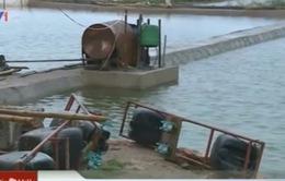Thái Bình: Mưa kéo dài, hàng trăm hộ dân phải bán tôm non