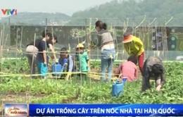Hàn Quốc: Độc đáo dự án trồng cây xanh trên nóc nhà