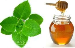 Húng chanh – Rau gia vị có giá trị dược liệu cao