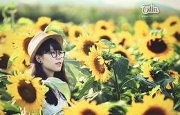 Cánh đồng hoa hướng dương – Điểm đến tuyệt đẹp của xứ Nghệ