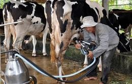TP.HCM: Ghi nhận chuyển biến tích cực sau 5 năm xây dựng nông thôn mới