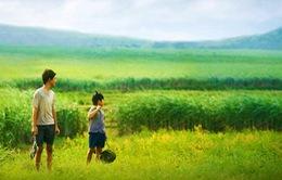 'Tôi thấy hoa vàng trên cỏ xanh' có doanh thu khủng nhất Việt Nam?