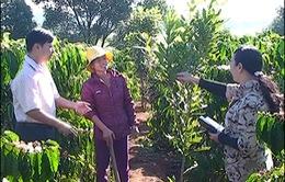 Gia Lai: Bóng hồng hết lòng cùng dân làng thoát đói nghèo
