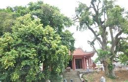 Công nhận trên 970 cây di sản Việt Nam