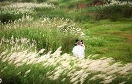 Giới trẻ thích thú chụp ảnh tại đầm lau bãi đá sông Hồng