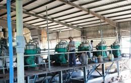 Đăk Lăk: Quy hoạch 5 nhà máy chế biến tinh bột sắn