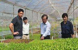 Đẩy mạnh xuất khẩu rau Đà Lạt sang Nhật Bản