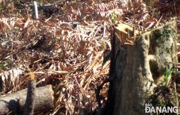 Khởi tố đối tượng phá 5,3 ha rừng