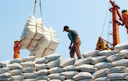 Lượng gạo xuất khẩu qua biên giới phía Bắc giảm mạnh