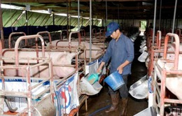 Vệ sinh an toàn thực phẩm - Cản trở lớn của chăn nuôi Việt Nam trong TPP