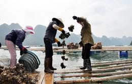 """Ngư dân Bản Sen (Quảng Ninh) """"chìm"""" trong nợ sau cơn lũ lịch sử"""