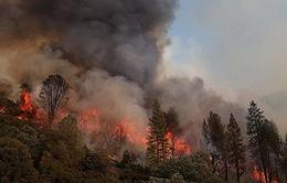 Cháy rừng tại bang Alaska, Mỹ