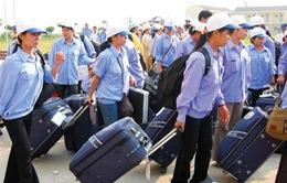 Năm 2015, hơn 7.000 lao động có cơ hội sang Hàn Quốc làm việc