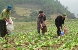 Tỉnh Phú Yên gồng mình chống hạn cho cây trồng
