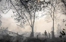 Indonesia: Tình trạng khói mù do cháy rừng ngày càng nghiêm trọng