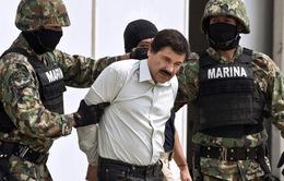 Mexico treo thưởng 3,8 triệu USD truy nã trùm ma túy vượt ngục