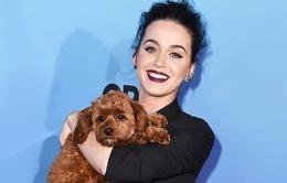 Katy Perry phải đổi số điện thoại vì…cún cưng