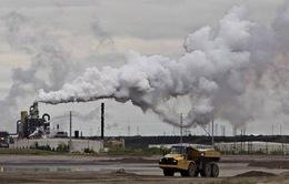 Ireland nỗ lực thực hiện chương trình giảm khí thải nông nghiệp
