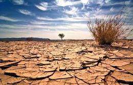 Biến đổi khí hậu tác động đến khoản tín dụng 2.000 tỷ USD