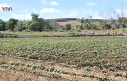 Hỗ trợ nông dân nâng cao giá trị sản phẩm khoai lang