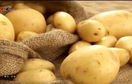 Nhà máy chạy bằng năng lượng từ khoai tây