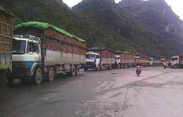 Lượng dưa hấu ùn ứ tại cửa khẩu Tân Thanh giảm 25%
