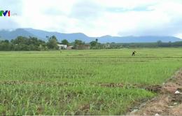 Bình Thuận: 145 người cùng một xã bị mắc bệnh ung thư