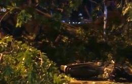 Dông lốc làm 1 người chết, 3 người bị thương, 13 ô tô bị đè bẹp