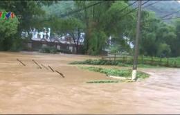 Hôm nay, dự kiến cấp điện trở lại nơi bị ảnh hưởng mưa lũ