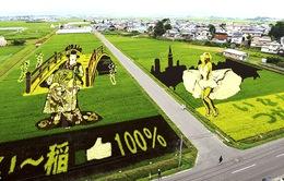 Những cánh đồng lúa đầy nghệ thuật ở Nhật Bản