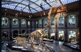 10 viện bảo tàng khủng long lớn nhất thế giới