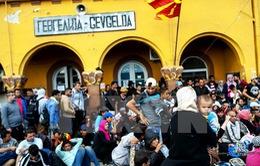 Macedonia hạn chế mở cửa biên giới cho người di cư bất hợp pháp