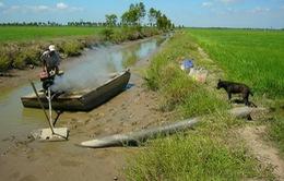 Xâm nhập mặn ảnh hưởng 40% diện tích lúa tại ĐBSCL