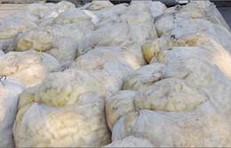 TP.HCM: Phát hiện hơn 43 tấn măng ngâm hóa chất độc