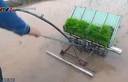 Chế tạo thành công máy cấy lúa không sử dụng động cơ