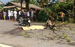 Hà Tĩnh: Cây đổ trên tỉnh lộ, 1 người tử vong
