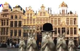 Bỉ thu hút du khách dịp Giáng sinh bằng... mèo
