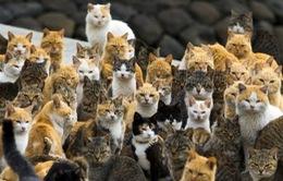 Australia lên kế hoạch tiêu diệt 2 triệu con mèo hoang