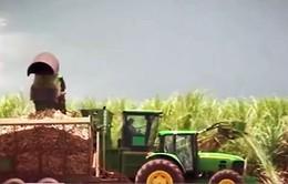 Công nhân ngành mía đường yêu cầu chính sách bảo hộ giá đường