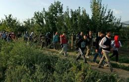 Croatia mở cửa biên giới cho người nhập cư lên phía Bắc