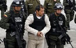 Colombia bắt giữ 22 trùm ma túy bị Interpol truy nã